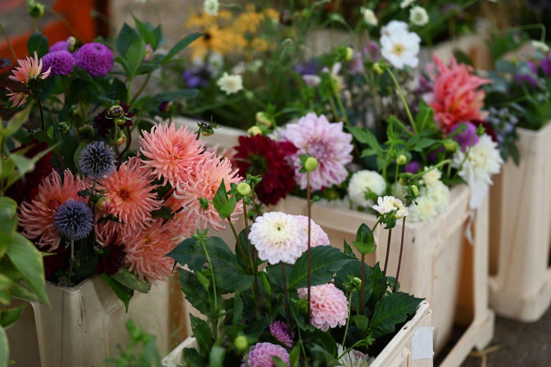 Beechfield Flower Farm